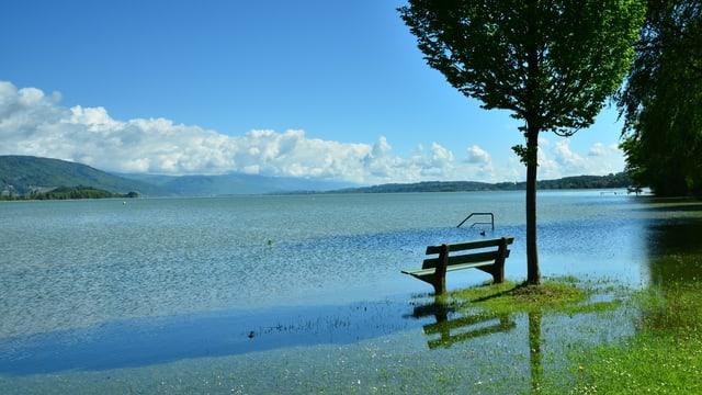 Im Zentrum des Bildes ein Baum und davor, knapp über Wasser, eine Spazierbank. Im Hintergrund der Bielersee und überflutete Parkwiesen.