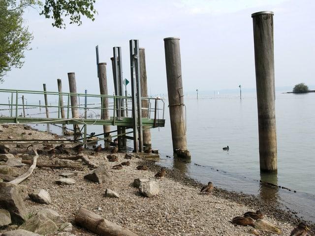 Steg am Ufer eines Sees mit viel zu wenig Wasser. Der Steg ragt weit über der Wasseroberfläche hinaus.