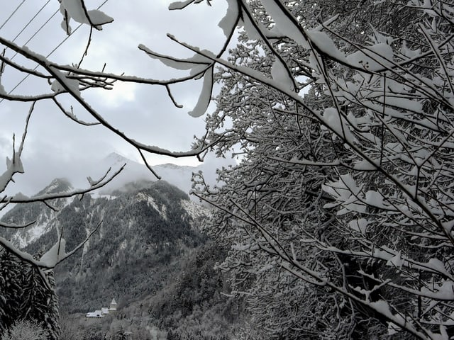 Blick unter den Bäumen in den Schnee.