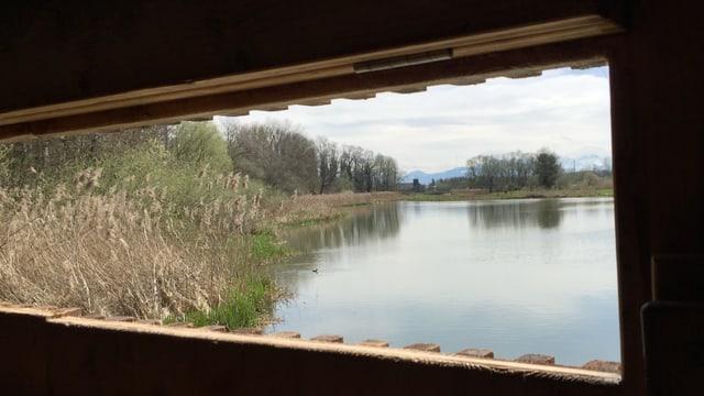 Der Flachsee aus der Vogelbeobachtungsstation