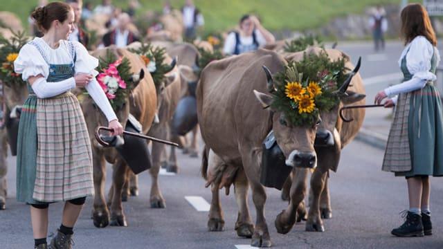 Junge Frauen in Trachten stehen in einer Gruppe von Kühen.