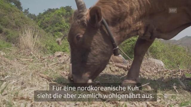 Video «Brennpunkt Ostasien: Güterzüge, Hunger und Raketen» abspielen