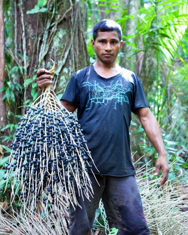 Ein Mann mit einem Busch voller Açai-Beeren.