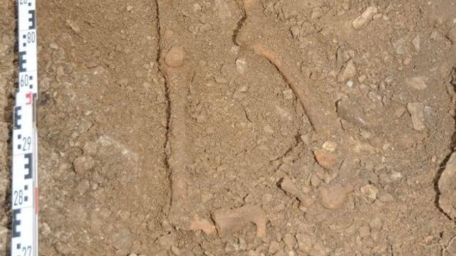 Die Beinknochen des ausgegrabenen Skeletts, noch in der Erde am Fundort, daneben ein Zollstock.