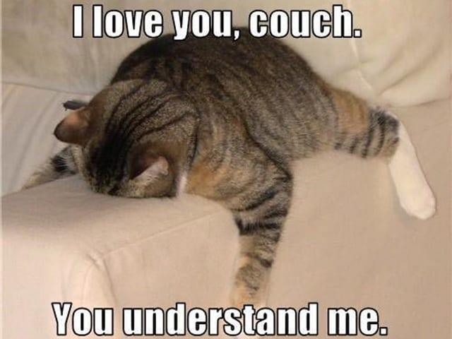 Eine Katze liegt auf dem Bauch ausgestreckt auf der Lehne eines Sofas. Bildüberschrift: «I Love You Couch. You Understand Me.»