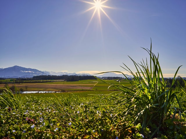 Grüne Wiese an der Sonne