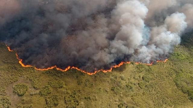 Luftaufnahme des Buschbrands