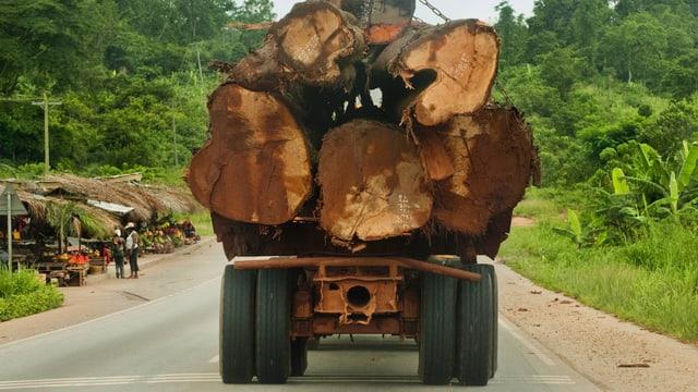 Ein Lastwagen in Atobiase in Ghana transportiert abgeholzte Bäume aus dem Regenwald ab.