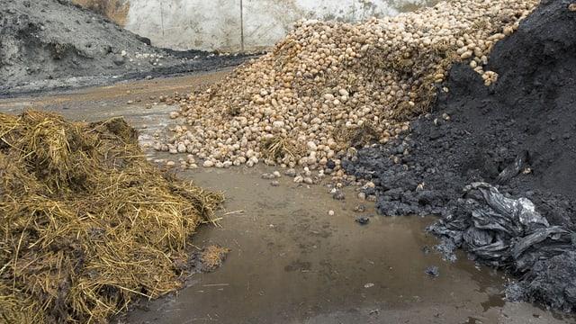 pflanzlicher Abfall