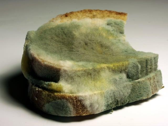 Grünverschimmelte Brotscheiben.