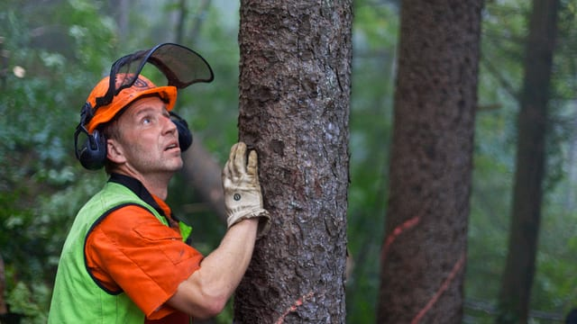 Förster steht bei einem Baum