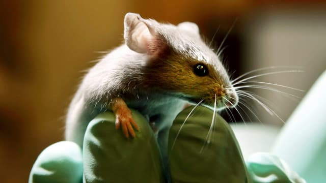 Tenor ils iniziants sajan tals experiments delicts criminals nua che animals vegnian maltractads.