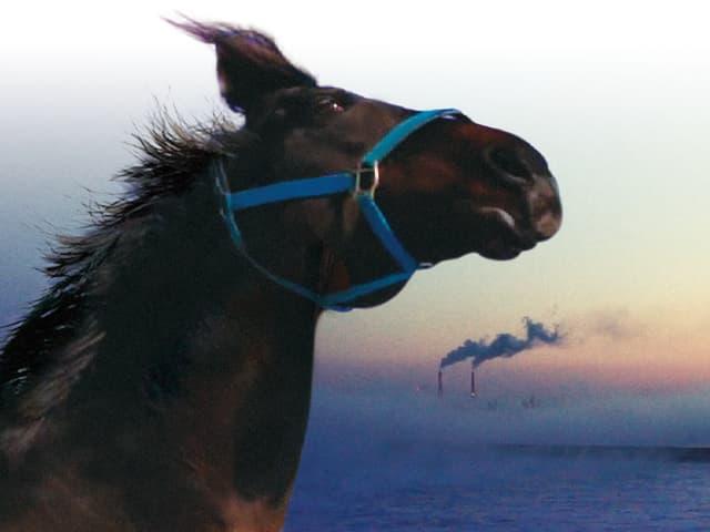 Ein Pferd, im Hintergrund eine Fabrik mit rauchenden Schornsteinen