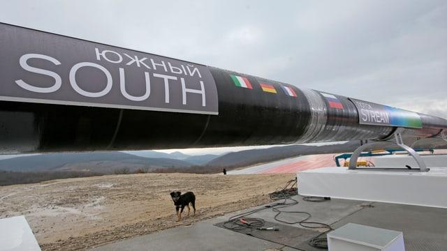 Stück einer Pipeline, ein Hund steht darunter.