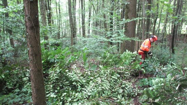 Ein Mann in oranger Uniform und Helm steht inmitten von Sträuchern und Bäumen im Wald.