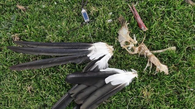 Die Überreste des Storches, aufgenommen am 25. Dezember 2012, einige Kilometer südlich von Madrid.