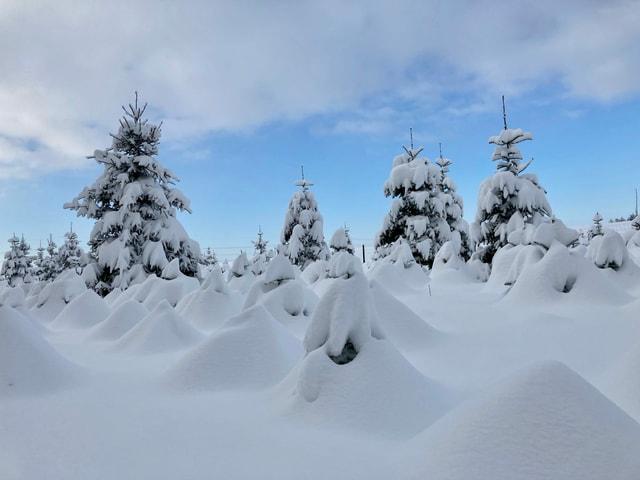 Viel Schnee und verschneite Bäume.