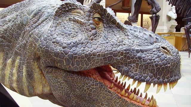 Rekonstruktion des Kopfes eines Tyrannosaurus rex im Oxford University Museum of Natural History.