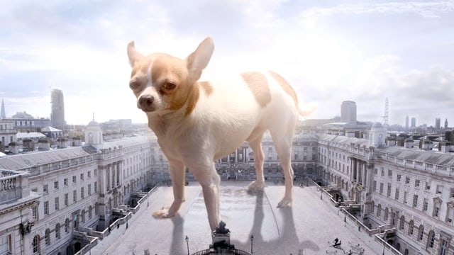 Ein riesiger Hund auf einem Platz in einer Stadt.