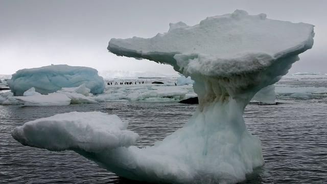 Ein Eisblock schwimmt in den antarktischen Gewässern. Im Hintergrund sind Pinguine zu sehen.