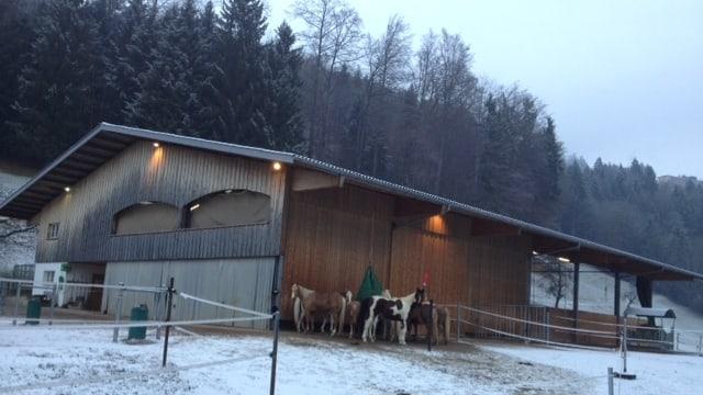 Winterliche Morgenstimmung beim Reitstall von Judith Baumeister in Laupen (ZH).