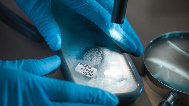 Gummihandschuhe halten einen Fingerabdruck unter eine Lampe