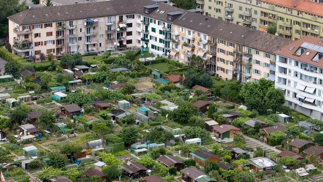Blick auf die Schrebergärten in der Hardau in Zürich - vier davon müssen einer neuen Wohnsiedlung weichen.
