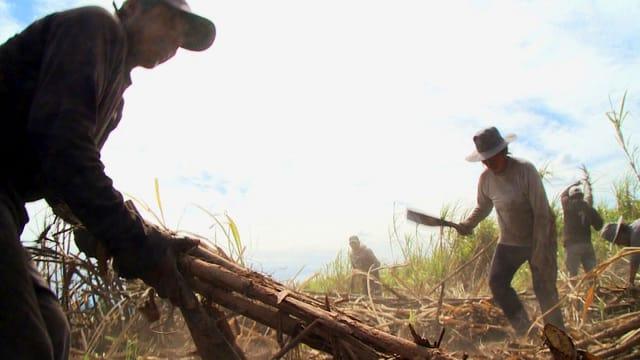 Video «Eine Gewerkschaft für die Zuckerrohrarbeiter in Bolivien» abspielen
