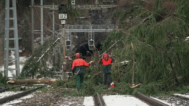 Umgestürzte Tannen blockieren eine Bahnstrecke.