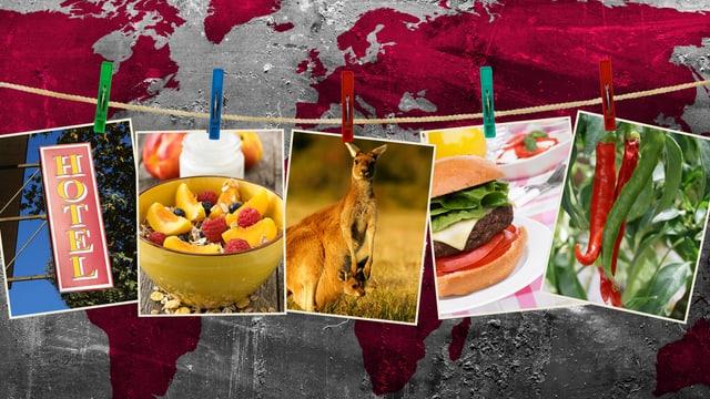 Collage mit Bildern zu Tieren, Pflanzen oder Lebensmittel.
