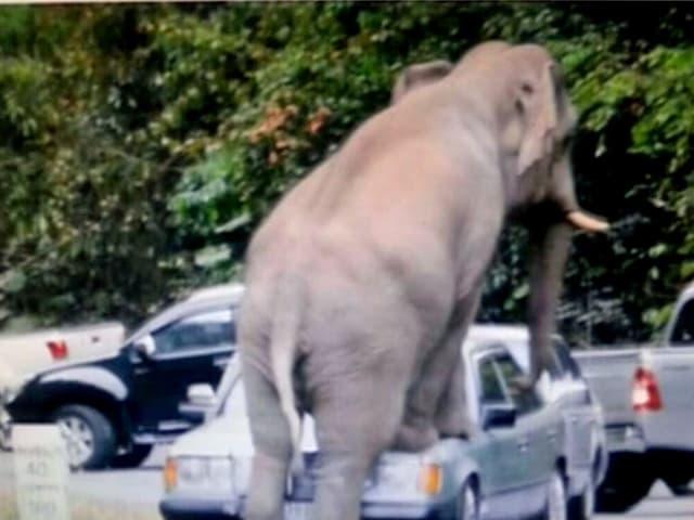 Elefant besteigt Auto