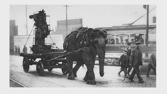 Elefant zieht eine Haubitze auf einem Karren ins Gefecht