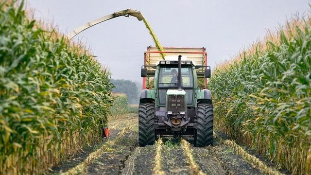 Ein Bauer schneidet mit seinem Traktor den Mais.