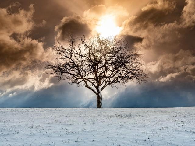 Sonne hinter einem Baum und Wolken bei schneebedeckter Wiese