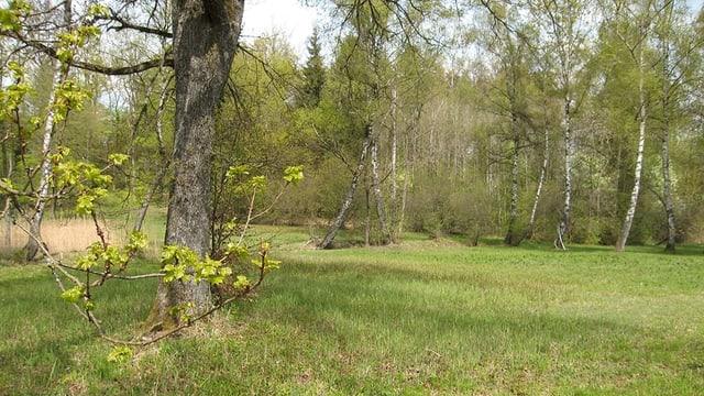 Blick in den Uetlibergwald