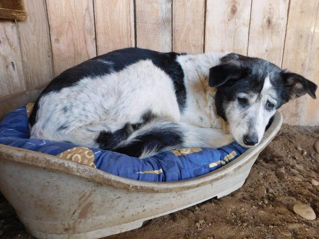 Hund in Hundebett im Tierheim.