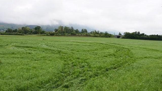 Wiesland mit den Spuren, welche die Grasmäher nach ihrer Zerstörungstour, hinterlassen haben.