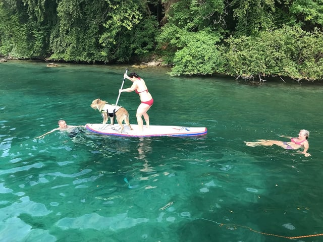 Frau steht mit ihrem Hund auf einem Stand Up Paddle auf dem See.