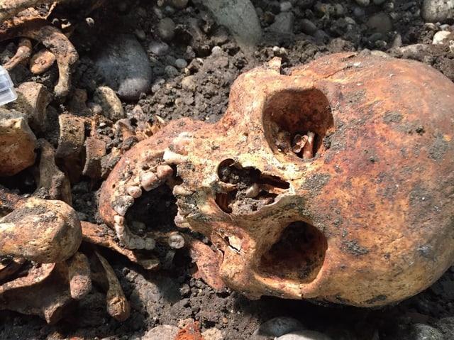 Verwitterter Totenschädel in der Erde