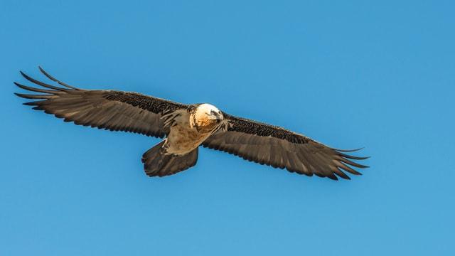Ein riesiger Vogel segelt mit ausgebreiteten Flügeln durch den blauen Himmel.