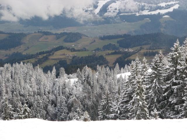 Schnee auf den Tannen der voralpen