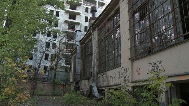 Blick auf ein Haus mit grosser Fensterfront, dessen Scheiben teilweise kaputt sind. Davor ein Kiesplatz und Büsche.