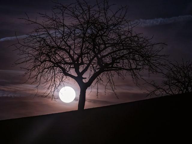 Baum in einer klaren Vollmondnacht