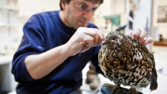 Mann arbeitet an einem ausgestopften Vogel