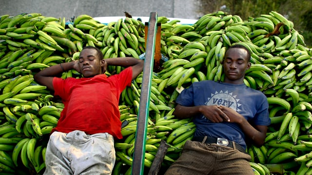 Männer schlafen auf einer Bananen-Ernte in Haiti.