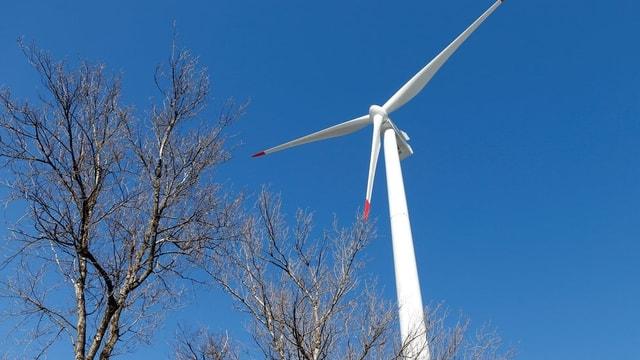Eine Windturbine vor blauem Himmel mit einigen Bäumen im Vordergrund.