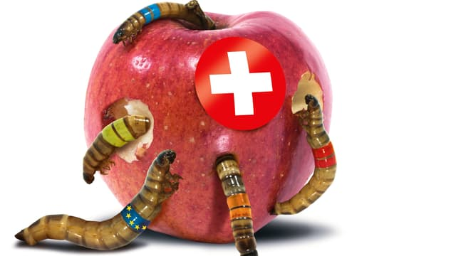 Das Sujet der SVP Schweiz