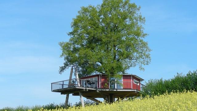 Rotes Baumhaus in Rapsfeld mit grosser Eiche mit blauem Sommerhimmel.