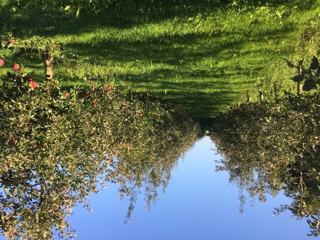 Viele Apfelbäume im Thurgau sind halb leer: Frost-und Gewitterschäden sind Schuld an der schlechten Ernte.