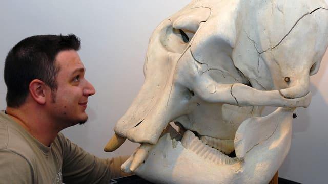 Erwachsener Mann begutachtet den Schädel eines Elefanten.